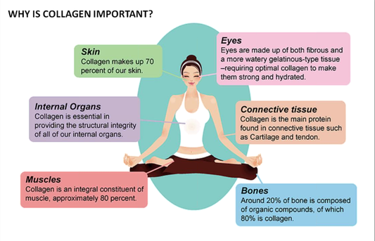 Importance of Collagen for the whole body
